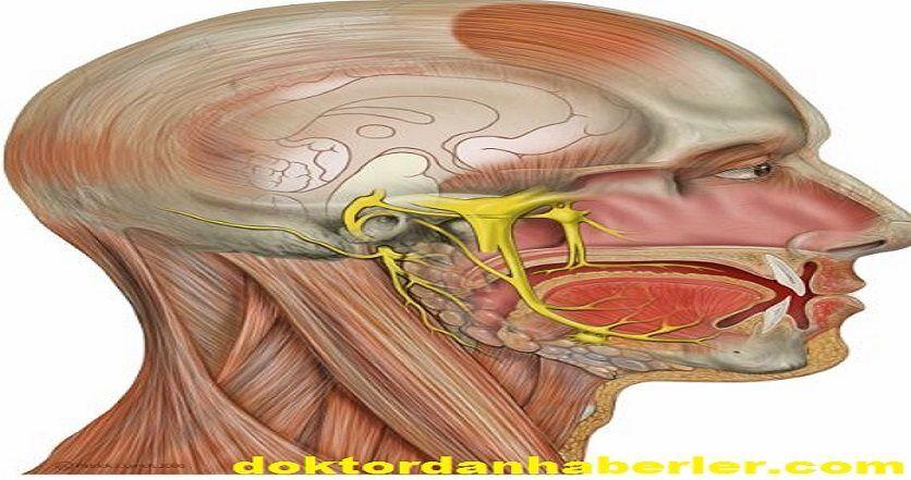nervus trigeminus ile ilişkili görsel.