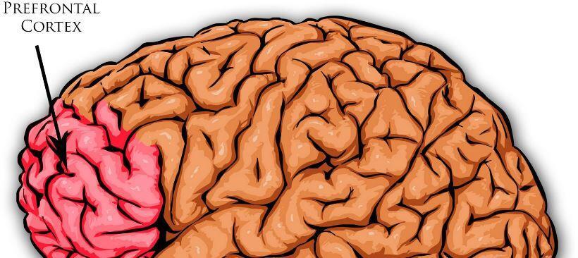 prefrontal korteks
