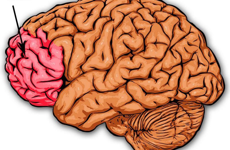 prefrontal korteks ile ilgili görsel sonucu