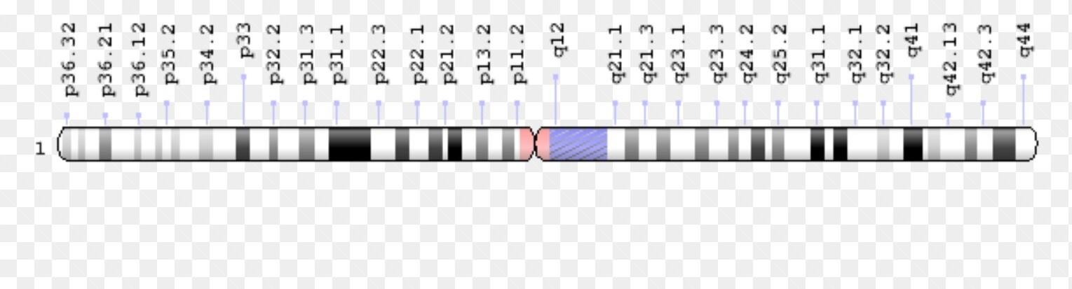 kromozom 1 ile iliskili hastaliklar
