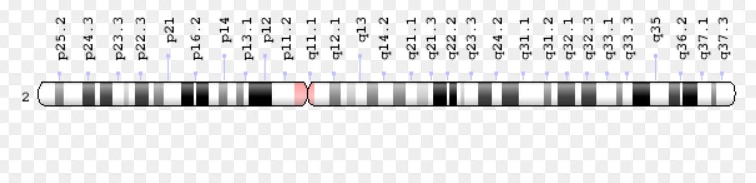 kromozom 2 ile iliskili hastaliklar