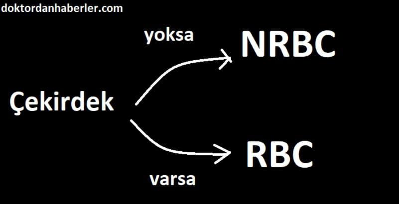 nrbc yüksekliği neden olur